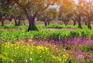 Beautiful trees, flowers, and greenery in the Sicilian countryside.
