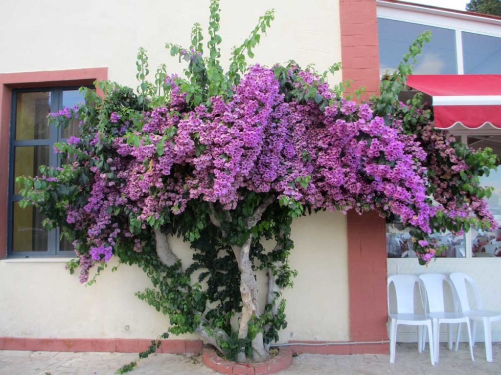 Scents of Sicily